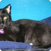 Adopt A Pet :: Kazzam - Powell, OH