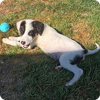 Adopt A Pet :: SanFran - Columbus, OH