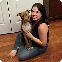 Adopt A Pet :: Kenna - Charlotte, NC