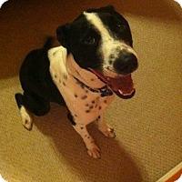 Adopt A Pet :: Oreo - Allen, TX