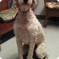 Adopt A Pet :: Finley - Tulsa, OK