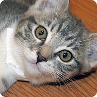 Adopt A Pet :: Serena - Irvine, CA