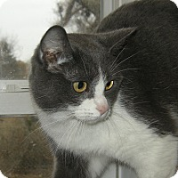 Adopt A Pet :: Jasmine - Germantown, MD