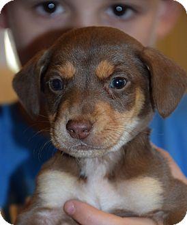 directory shelter veterinarian rescue york staten island