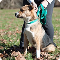Adopt A Pet :: Donald - New Martinsville, WV