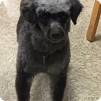 Adopt A Pet :: BoBo - Modesto, CA