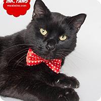 Adopt A Pet :: Mr. Paws - Wyandotte, MI