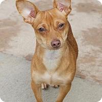 Adopt A Pet :: Starmie - Atlanta, GA