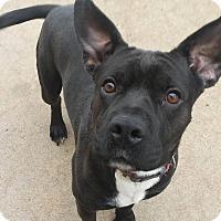 Adopt A Pet :: Graham - Wichita, KS