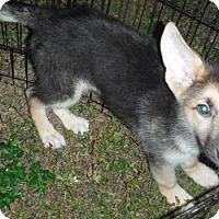 Adopt A Pet :: Nelson - Alpharetta, GA