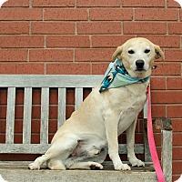 Adopt A Pet :: ELI - Poteau, OK