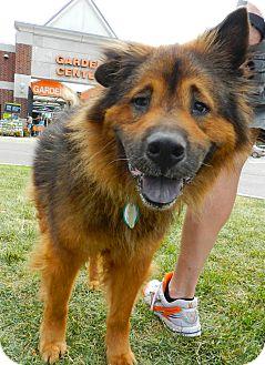 Birmingham Mi Dog Rescue