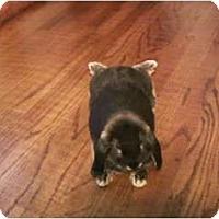 Adopt A Pet :: Parker - Plattsburgh, NY