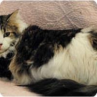 Adopt A Pet :: Maddie - Palmdale, CA
