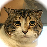 Adopt A Pet :: Rex Ranger - Middletown, CT