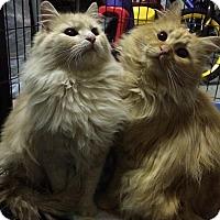 Adopt A Pet :: Sean and Owen - Harrisburg, NC