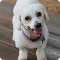 Adopt A Pet :: Anderson - Norwalk, CT