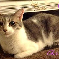 Adopt A Pet :: Cher-female- $45 - knoxville, TN