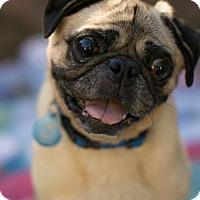 Adopt A Pet :: Ralph - Pismo Beach, CA