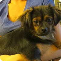 Adopt A Pet :: Mary - Westport, CT