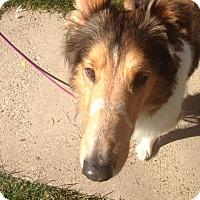 Adopt A Pet :: Jarrett - Powell, OH