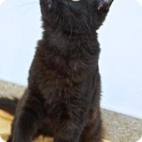 Adopt A Pet :: Jet - Englewood, FL