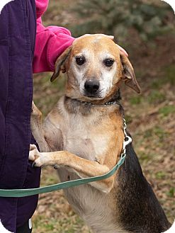 Beagle/Whippet Mix Dog for adoption in Cincinnati, Ohio - Raymond: Norwood