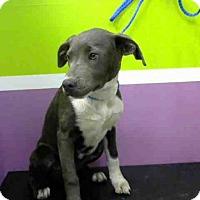 Adopt A Pet :: LACE - Houston, TX