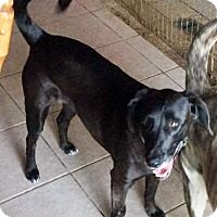 Adopt A Pet :: Adria - San Diego, CA