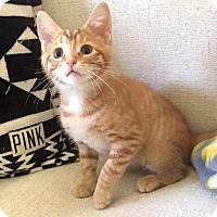 Adopt A Pet :: Sprout - Addison, IL