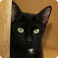 Adopt A Pet :: Celene - Lincoln, CA