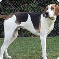 Adopt A Pet :: Elwood - SAN PEDRO, CA
