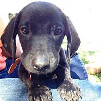 Adopt A Pet :: Tyrion - Maple Grove, MN