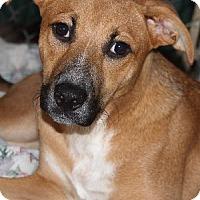 Adopt A Pet :: Bonnie - Savannah, MO