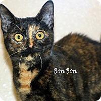 Adopt A Pet :: Bon Bon - Idaho Falls, ID
