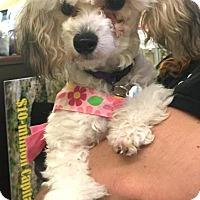Adopt A Pet :: Baby - Boca Raton, FL