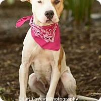 Adopt A Pet :: Peaches-ADOPT Me! - Redondo Beach, CA
