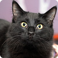Adopt A Pet :: BUTTERCUP - Royal Oak, MI