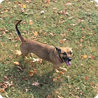 Adopt A Pet :: Katie - Breinigsville, PA