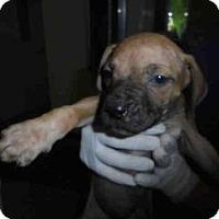 Adopt A Pet :: DUCKY - Lacombe, LA