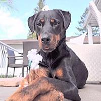 Adopt A Pet :: Bailey - Surrey, BC