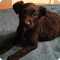 Adopt A Pet :: Nixon - Allentown, PA