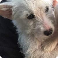 Adopt A Pet :: Alfred - Winchester, CA
