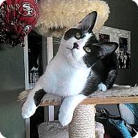 Adopt A Pet :: Rascal Ryan $10 TO ADOPT! - San Jose, CA