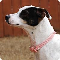 Adopt A Pet :: Claire - Woodstock, GA