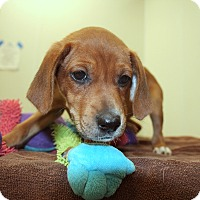 Adopt A Pet :: Frost - Woodstock, IL