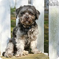 Adopt A Pet :: Newman - Troy, IL