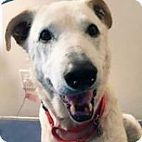 Adopt A Pet :: Bear - Irvine, CA