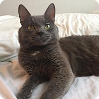 Adopt A Pet :: Smokey - Toronto, ON