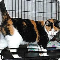 Adopt A Pet :: Blossom - Sunderland, ON